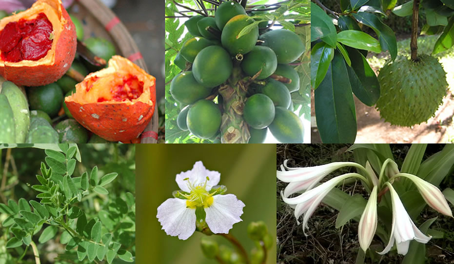 Healthy Prostate and Ovary Herbs