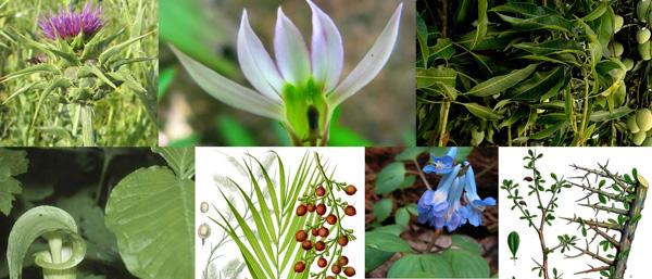 Lymph Cleanse Herbal Herbs